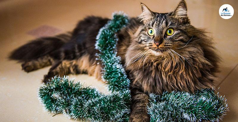 Nouvelle année : Les bonnes résolutions à prendre pour votre chat