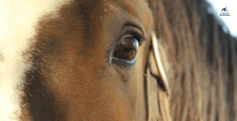 La vision du cheval