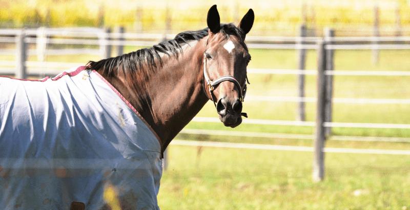 La Teigne du cheval