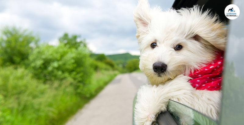 Comment voyager en voiture avec son chien ?