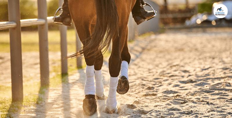 Comment bien choisir les bandes pour mon cheval ?