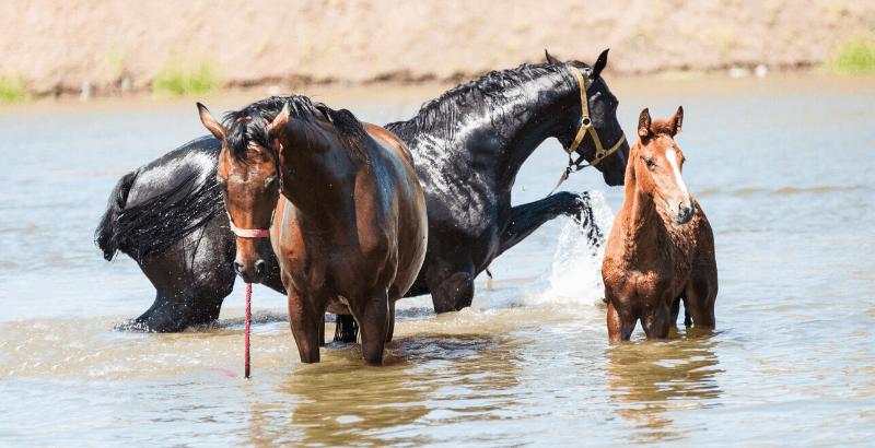 Le cheval en été : Quels sont les points à surveiller ?
