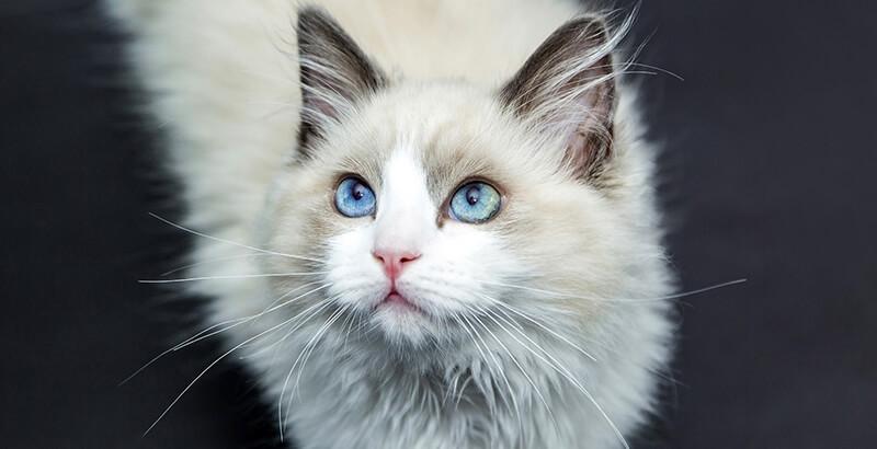 Comment prendre soin des yeux de son chat / chien ?