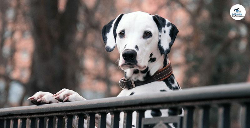Gardez votre animal en sécurité avec PetSafe