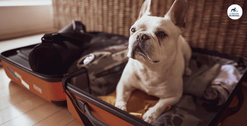 Départ en vacances : Comment aider son chien avec Zylkène ?