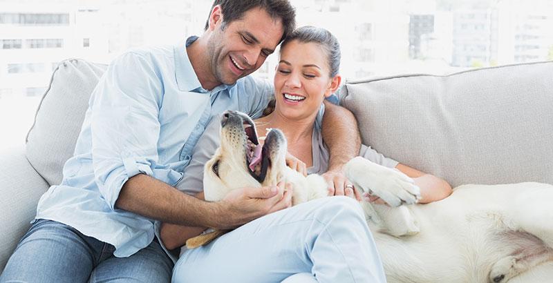 Le coronavirus chinois : Quel risque pour nos animaux de compagnie ?