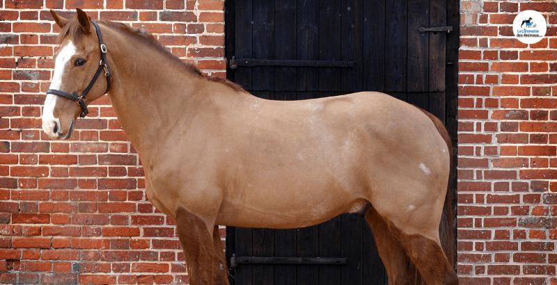 Réussir la tonte de mon cheval : nos conseils pratiques