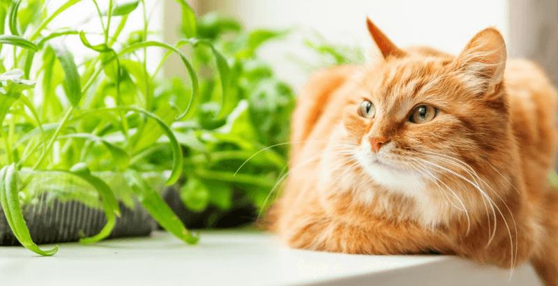 La constipation chez le chat