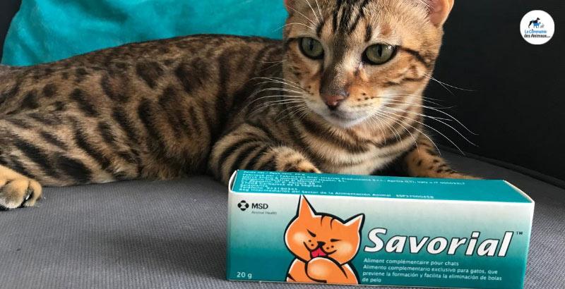 On a testé : Savorial anti boules de poils pour chat VIDEO