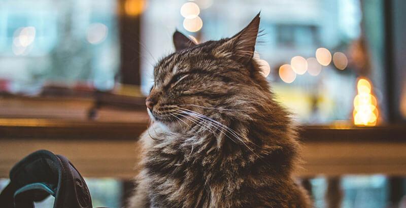 Comment éviter les problèmes de malpropreté chez le chat ?
