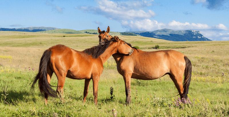 Vermifugation du cheval : Comment agir sur son environnement ?