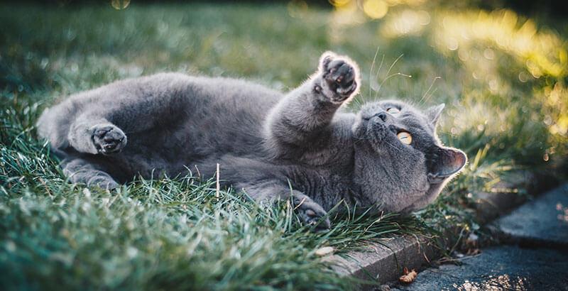 Faire sortir son chat dans le jardin