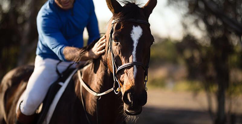 La toux du cheval : Symptômes et traitements