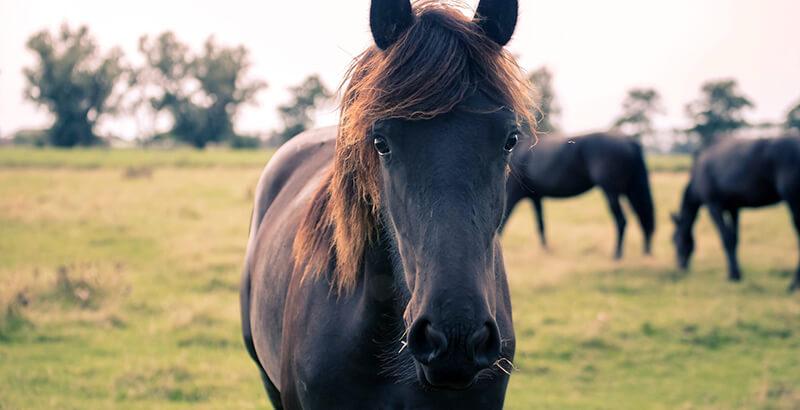 Pourquoi faut-il vermifuger son cheval ?