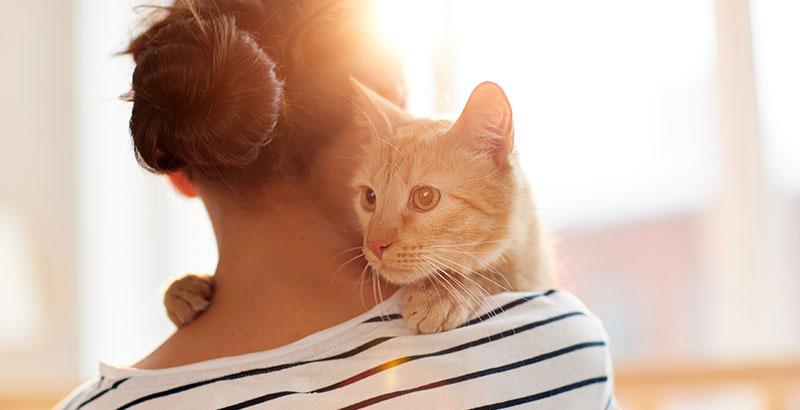 Comment manipuler un chat pour en prendre soin ?