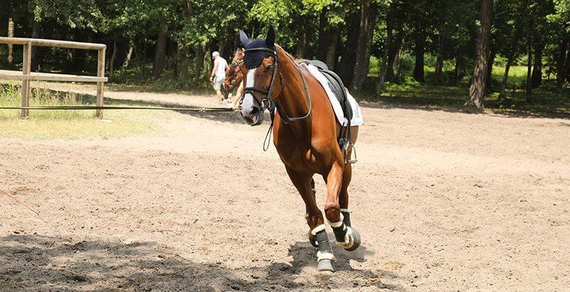 Les 4 causes de la myosite chez le cheval