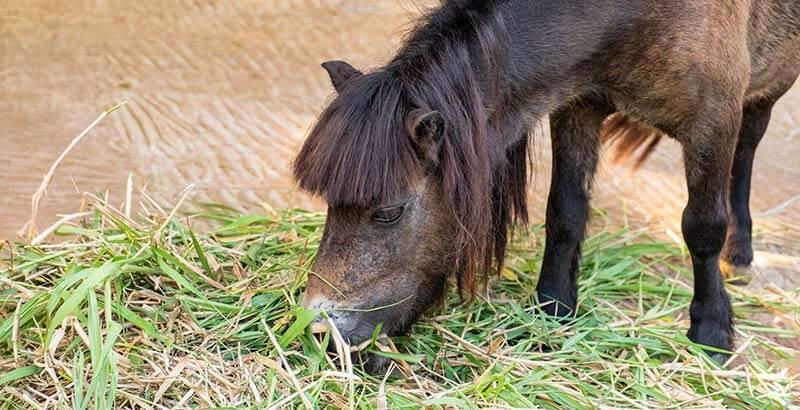 La vermifugation du cheval au printemps