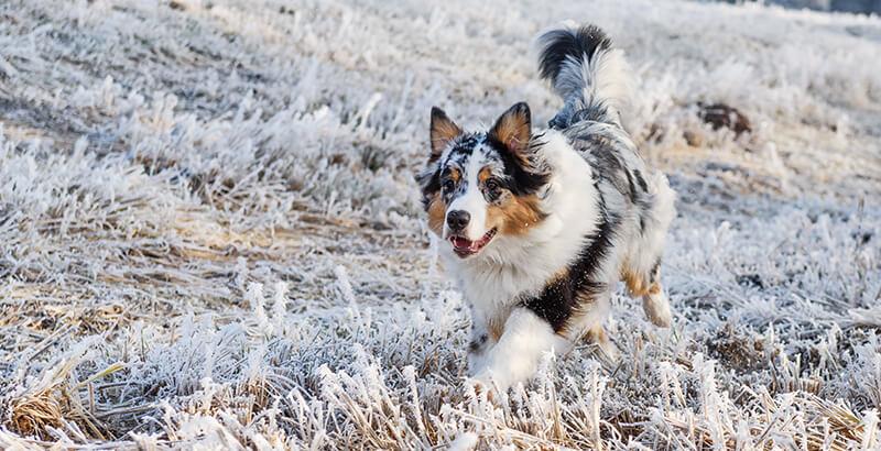 Mon chien vit dehors, comment le protéger des intempéries ?