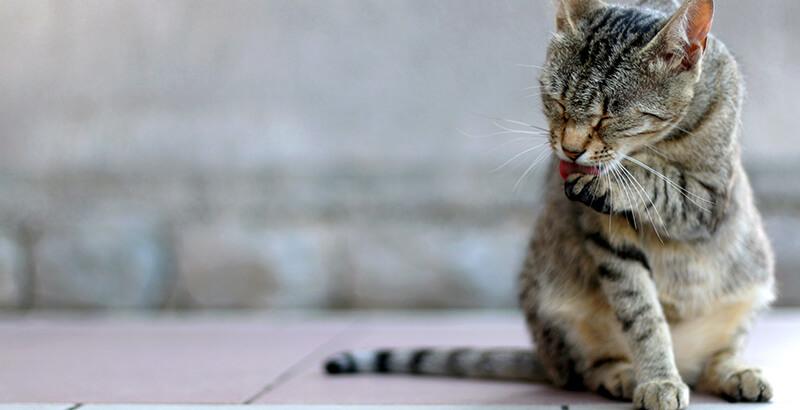 Seraquin : Pour prendre soin de son chat âgé