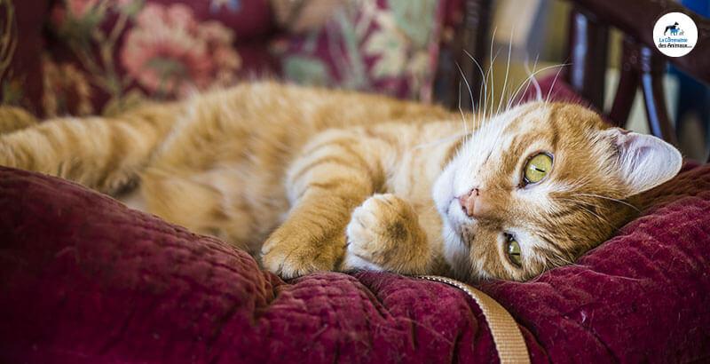 Vrai ou Faux : Les chats peuvent tomber malade à cause du froid