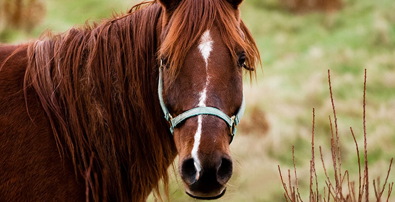 Comment protéger son cheval des tiques ?