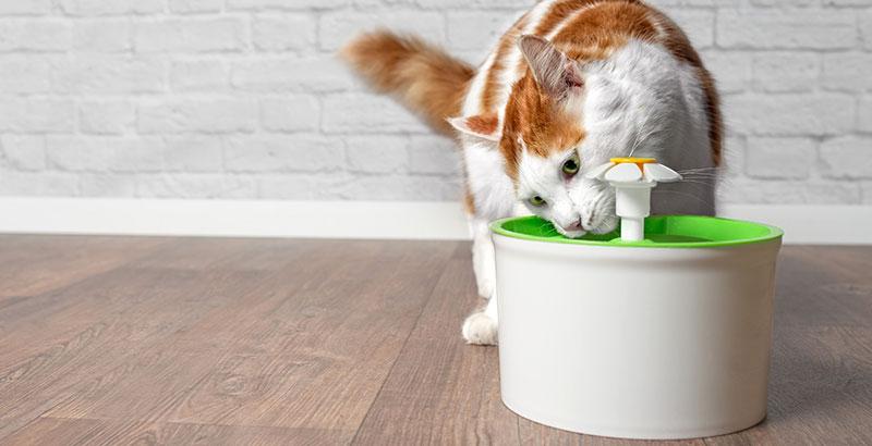 Mon chat boit beaucoup, est-ce grave ?