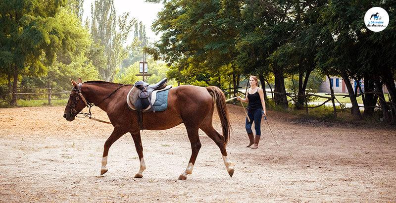 Les bienfaits de l'Harpagophytum chez les chevaux