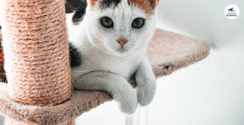 Pourquoi mon chat s'arrache-t-il les griffes ?