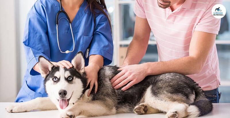 Vrai ou Faux : Mon chien se gratte parce qu'il a des puces