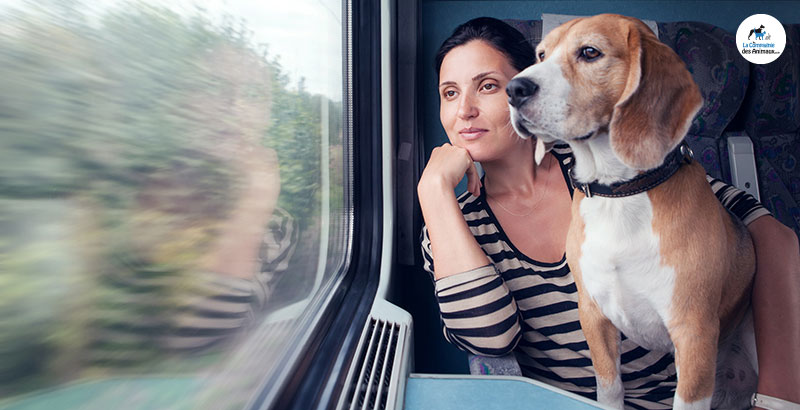 Comment voyager en train avec son animal ?