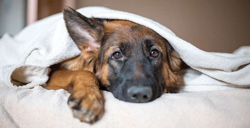 Comment aider son animal convalescent ?