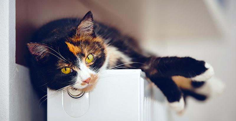 Pourquoi les chats vomissent-ils ?