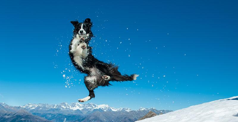 Quiz : Testez vos connaissances sur les chiens