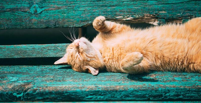 Attention au chat qui se prélasse au soleil...