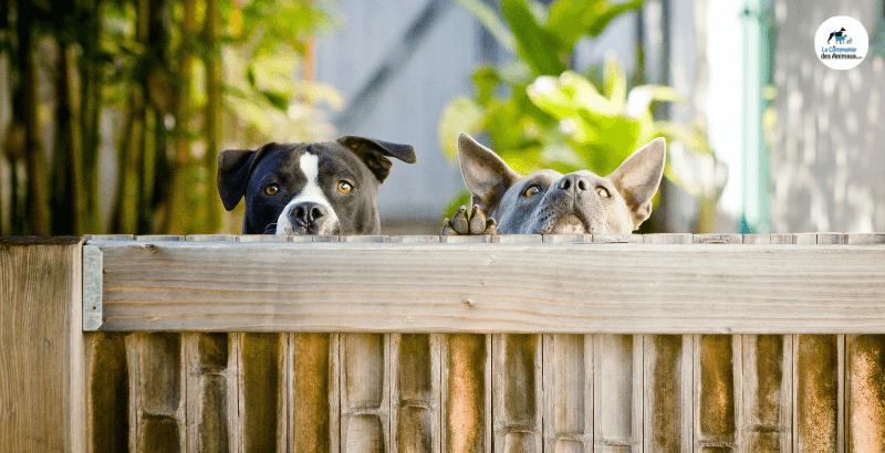 Comment stopper les fugues de son chien ?