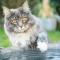 Les chats trempent leurs pattes dans l'eau pour s'amuser?