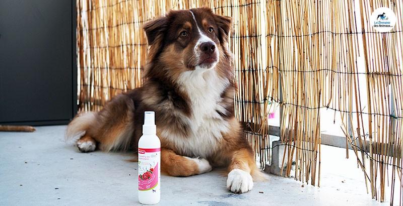 On a testé : Le shampooing sec BIO Beaphar