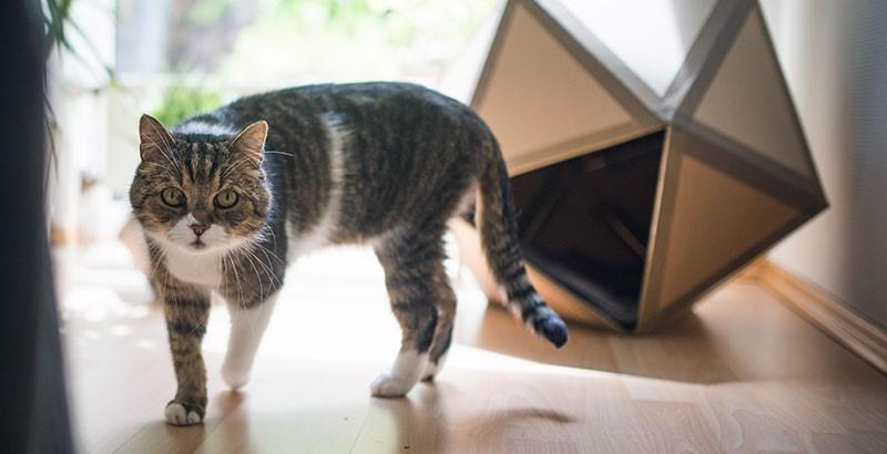 Le territoire du chat : 4 espaces bien distincts