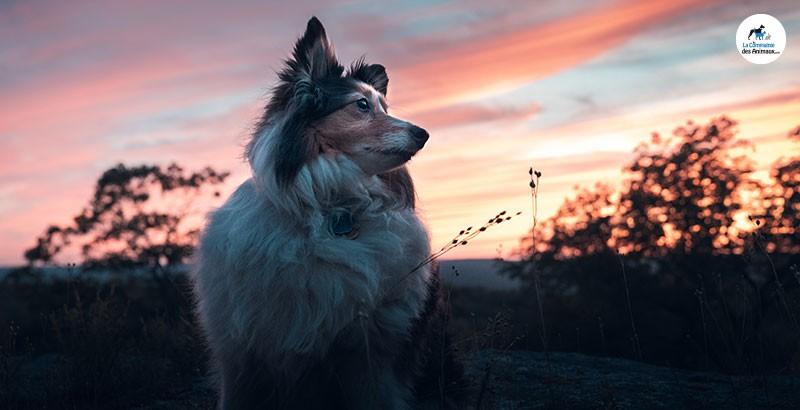 Guide des accessoires lumineux pour chien