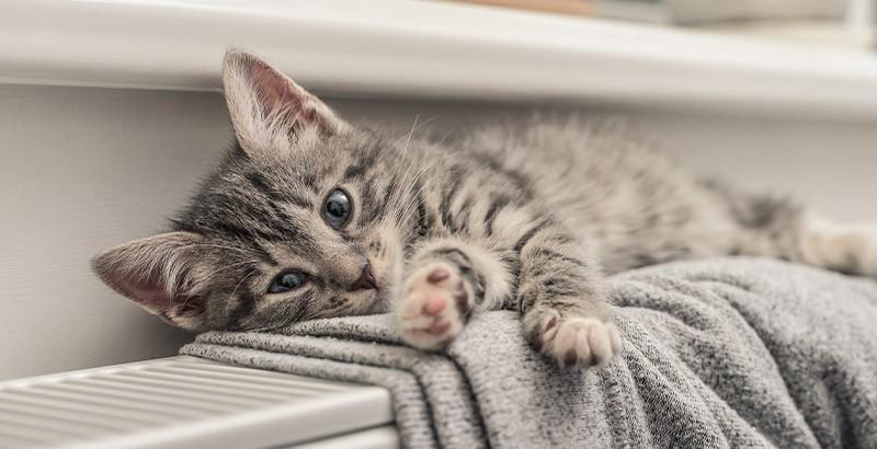 Le sommeil du chaton