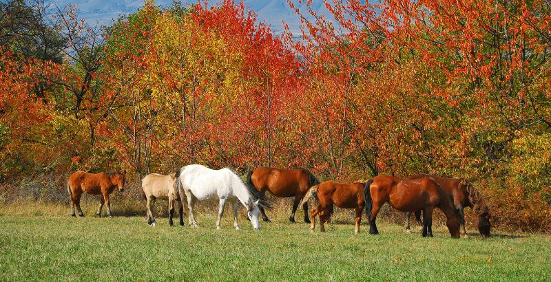 La Myopathie Atypique chez le cheval