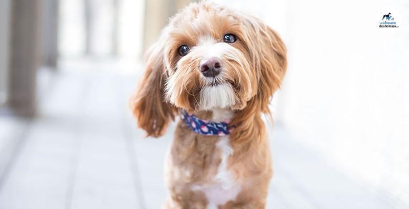 Quiz : Votre chien vous reconnaîtrait-il si vous vous déguisiez ?