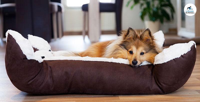 Comment nettoyer la gamelle et le couchage de son chien ?