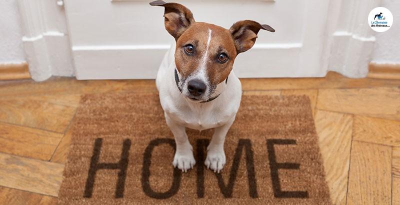 Comment débarrasser votre maison des mauvaises odeurs ?