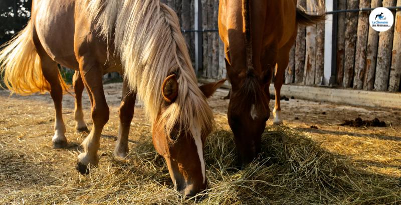Quels sont les aliments dangereux pour les chevaux ?