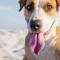 Nos conseils pour un été agréable pour votre chien !