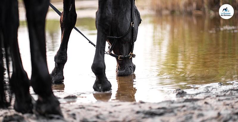 Comment soigner les crevasses des chevaux ?
