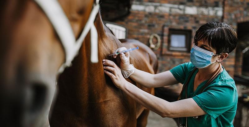 Le bilan sanguin chez le cheval