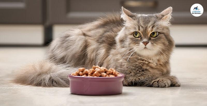 Pourquoi donner une alimentation sèche et humide à votre chat ?