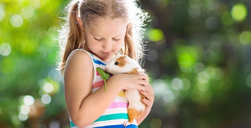 Vrai ou Faux : Le Cochon d'Inde ne convient pas aux jeunes enfants